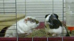 My two piggys (R.I.P.)