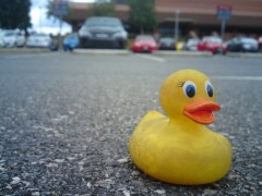 Rubber duckie in airport parking lot