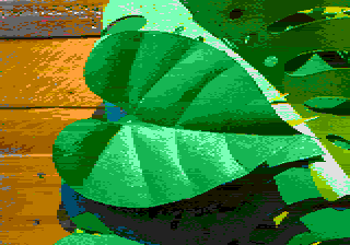 leaves01.png