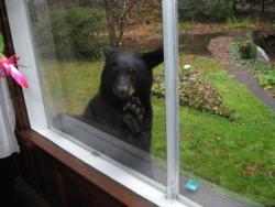 bear_looking_in_window.jpg