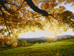 ilmenit-autumn-new-output.png