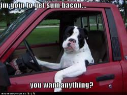 funny-dog-pictures-sum-bacon.jpg