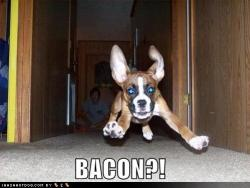 funny-dog-pictures-dog-runs-to-bacon.jpg